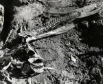 Fish_Skeleton